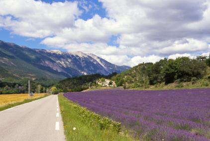 Mont Ventoux Lavendelmarker